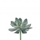 Succulent Pick Echeveria, D22cm, green floured